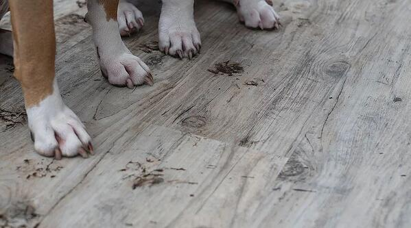 Child and Pet Friendly Flooring. Neither child nor animal can harm the floor. Furthermore, the floor can't harm them.