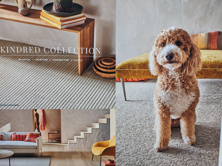 The Kindred Collection: Playful, Spirited, Connected, Lively